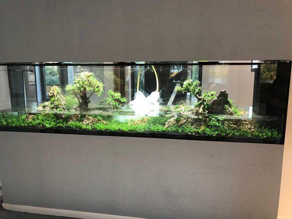 Aquascaping aquarium particulier