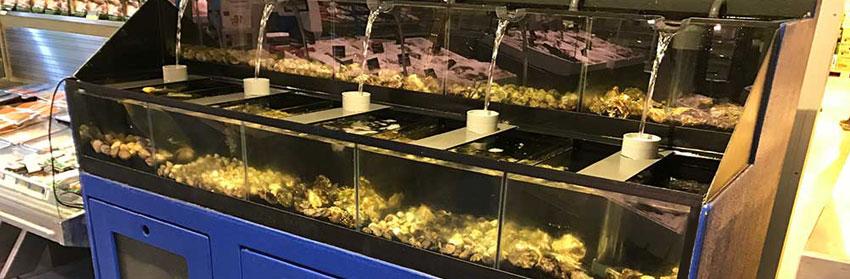 Bio Water Systems is een bedrijf dat zich met name heeft gespecialiseerd in het ontwerpen en bouwen van bewaarsystemen voor vissen, schaal- en schelpdieren.